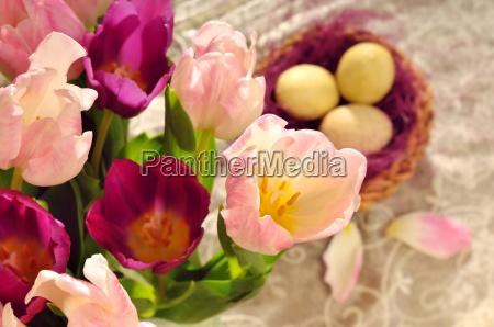 tulpen zur osterzeit