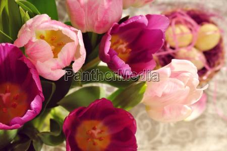 tulpen und osternest