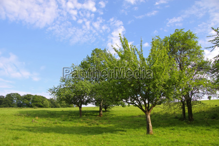 orchard in early summer