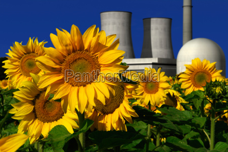 nuclear power plant behind a sunflower
