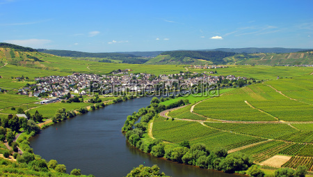 wine town on the mosel leiwen