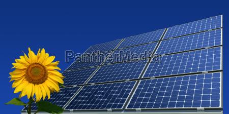 monokristalline solarmodule und sonnenblume