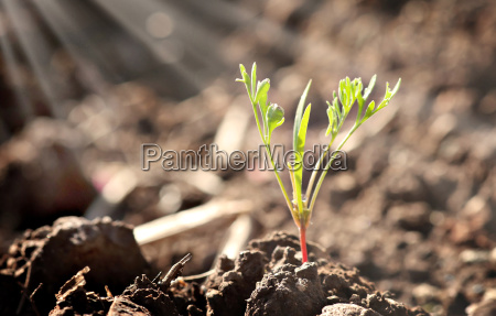 a tiny little young plant sprout