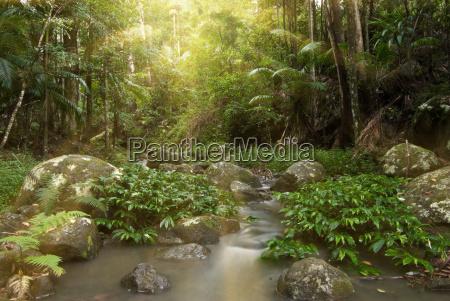 rainforest, rays - 4272811