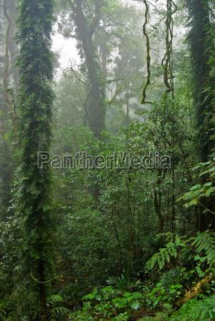 regen, wald - 4278301
