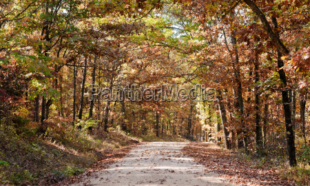 country road through autumn trees