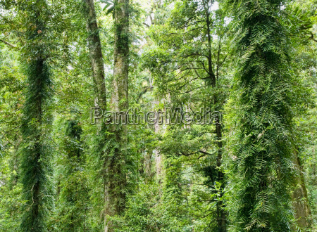 beauty, of, the, rainforest - 4298741