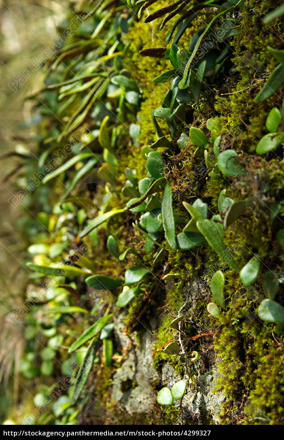 moss, and, plant - 4299327