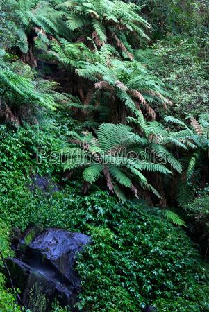 rainforest - 4299311
