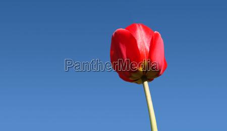 close up und wurmperspektive einer roten