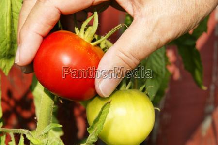 pfluecken abpfluecken essen nahrungsmittel lebensmittel nahrung