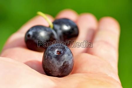 black olives on hand