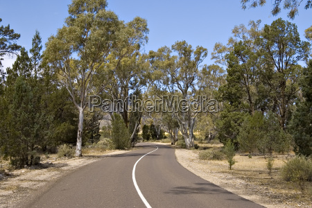 a winding tree lined road in