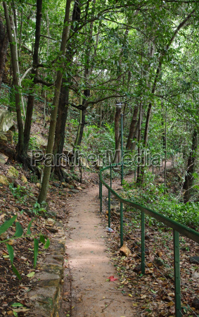 forest path in darwin