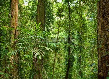 schöne, pflanzen, bäume, im, regenwald - 4336381