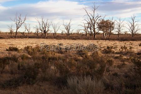 hard dry land