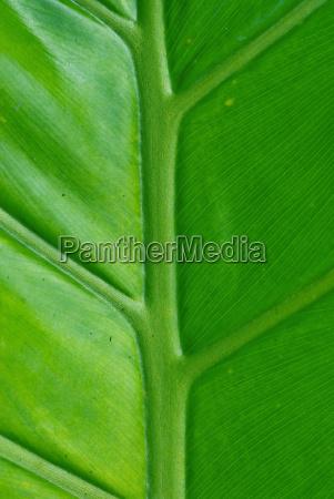 green palm leaf