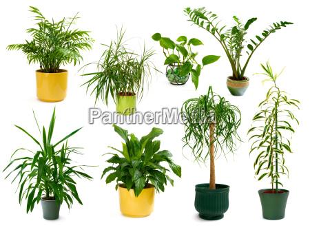 un conjunto de ocho plantas de