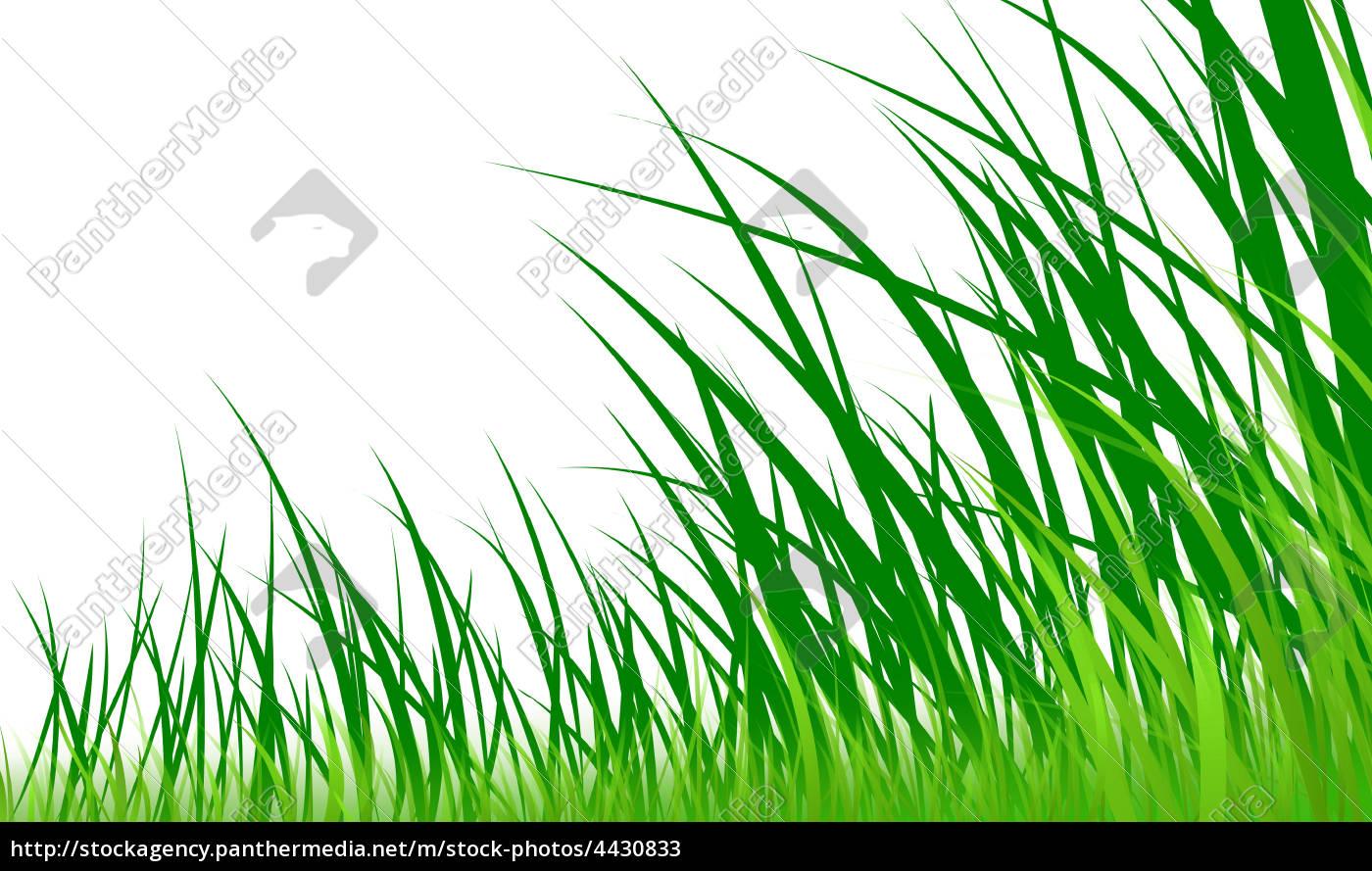 gras-grafik-wiese - Lizenzfreies Bild - #4430833