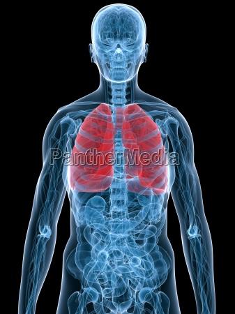 hervorgehobene lunge