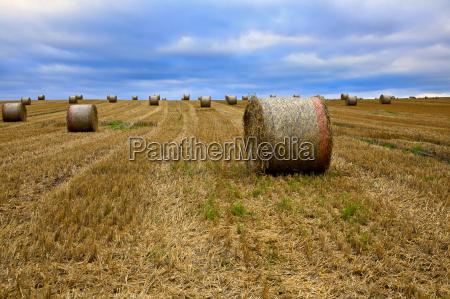 straw bales on a field in