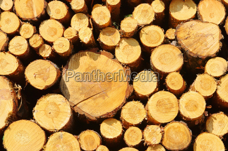 woodpile stack of wood 34