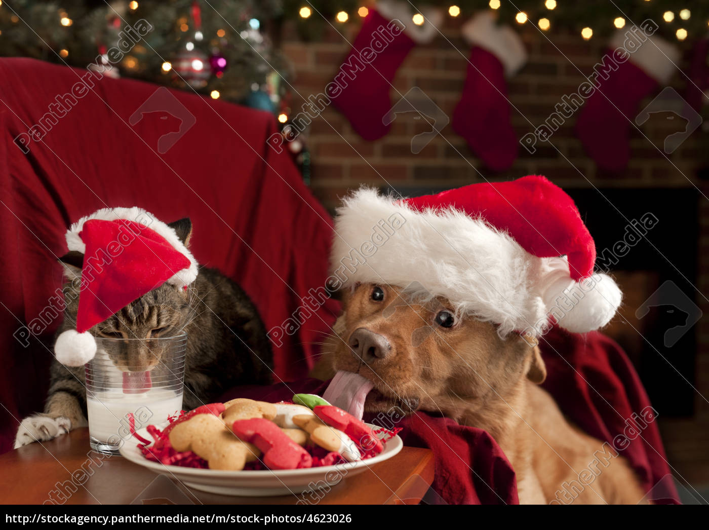 katze und hund essen nikolaus 039 snack stock photo. Black Bedroom Furniture Sets. Home Design Ideas