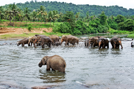 elefanten nehmen ein bad in dem