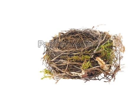 detail of blackbird nest isolated on