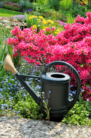 watering the garden with azalea