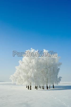winterlandschaft und baeume