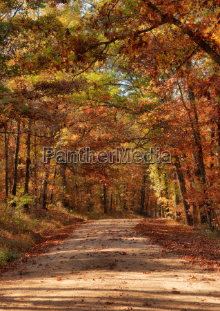 country road through autumn trees