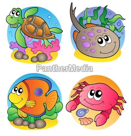 various marine animals images 1