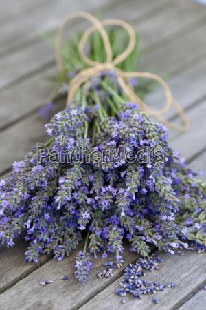 lavender bound