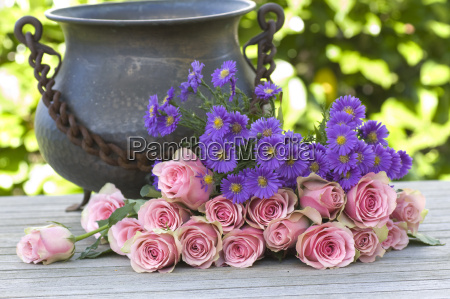 purple aster and pink roses with