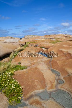 swedish summer landscape