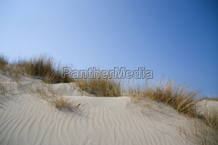 dune landscape with grass