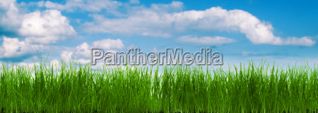 grass panorama with a blue sky