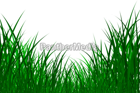 gras graphics