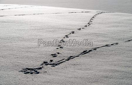 spuren im schnee footprint in