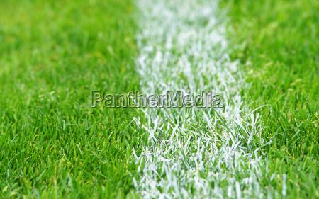 fussball rasen soccer grass