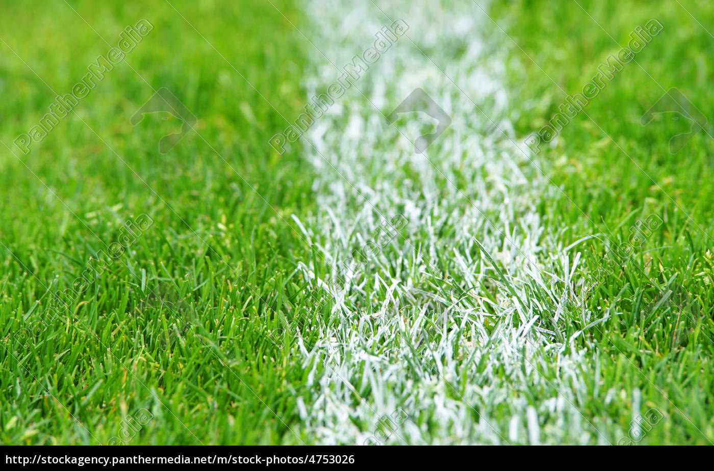 fu ball rasen soccer grass stockfoto 4753026 bildagentur panthermedia. Black Bedroom Furniture Sets. Home Design Ideas