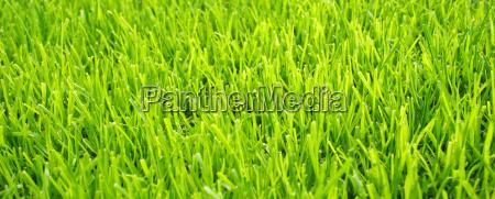 soccer grass fussball rasen textur