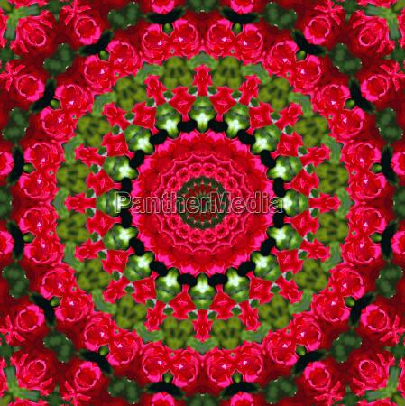 rote rosen mandala red roses