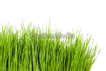 gruenes gras textfreiraum seitlich