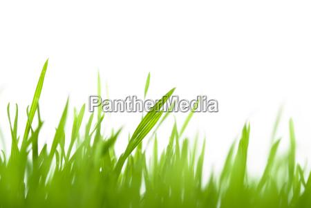 gruenes gras verschwommen
