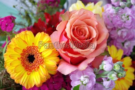 rose blumen blumenstrauss schnittblumen fresie gerbera