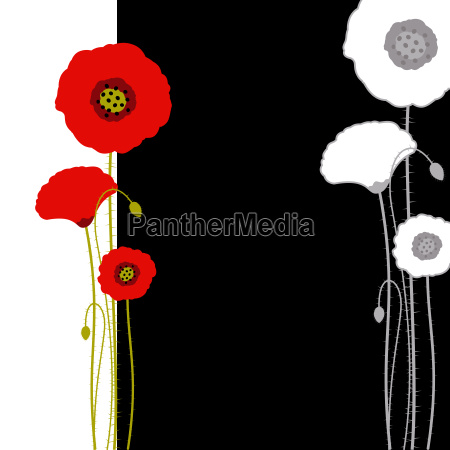 abstract red poppy on black and