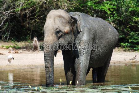 elefant das bad