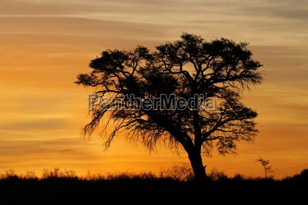 por do sol africano com arvore